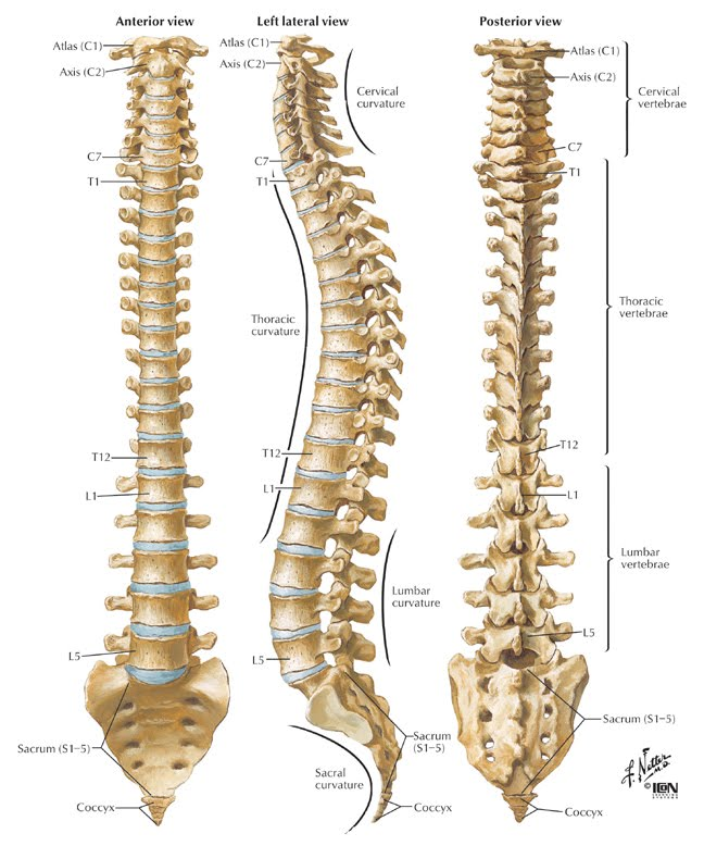 What can I do to reduce pain in the spine if it's been 2 years since the surgery?